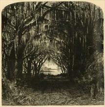 'Bonaventure Cemetery', 1872.  Creator: John Filmer.