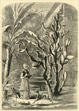 'A Garden in Florida', 1872.  Creator: John J. Harley.