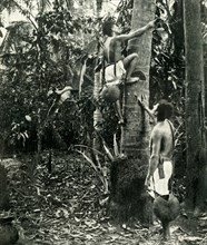 'Vegetation in the Tropical Forests', 1919. Creator: Unknown.