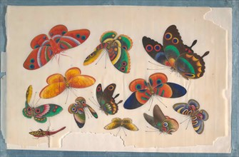 Album Containing Twelve Paintings of Insects, 19th century. Creator: Unknown.