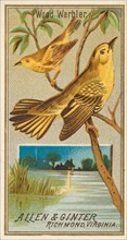 Wood Warbler, from the Birds of America series