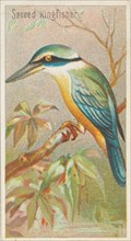 Sacred Kingfisher, from the Birds of the Tropics series