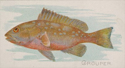 Grouper, from the Fish from American Waters series
