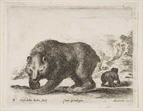 Plate 4: bear, from 'Various animals'