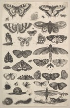 Forty-one Insects, including moths and butterflies, 1625-77. Creator: Wenceslaus Hollar.