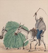 A man riding a mule, his whip raised, another mule loaded with grass alongside, from a group of drawings depicting Peruvian costume, ca. 1848.