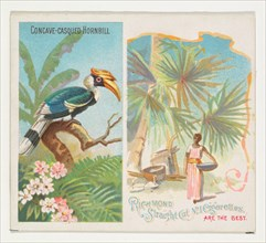 Concave-Casqued Hornbill, from Birds of the Tropics series (N38) for Allen & Ginter Cigarettes, 1889.