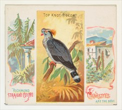 Top Knot Pigeon, from Birds of the Tropics series (N38) for Allen & Ginter Cigarettes, 1889.
