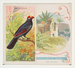 Violaceous, from Birds of the Tropics series (N38) for Allen & Ginter Cigarettes, 1889.
