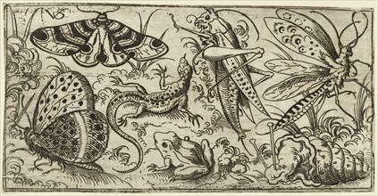 Group of insects and animals on a plain ground with grass, including a butterfly, a dragonfly, a moth, a cricket, a lizard, a frog, and a snail, 1530 - 1562. From Douce Ornament Prints Album I.
