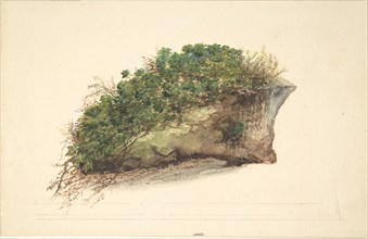 Study of a Piece of Turf, early 19th century.