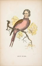 Sun Bird (James S. Wallace), from The Comic Natural History of the Human Race, 1851.