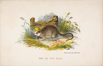 One of the Rats, from The Comic Natural History of the Human Race, 1851.