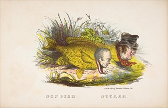 Son Fish and Sucker, from The Comic Natural History of the Human Race, 1851.