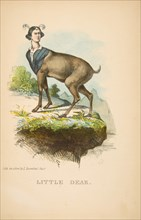 Little Dear, from The Comic Natural History of the Human Race, 1851.