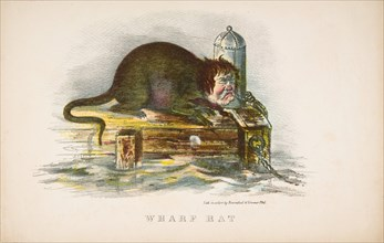 Wharf Rat, from The Comic Natural History of the Human Race, 1851.