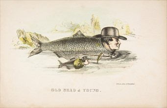 Old Shad & Young, from The Comic Natural History of the Human Race, 1851.