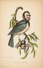 King Bird (Robert P. King and Alexander Baird), from The Comic Natural History of the Human Race, 1851.