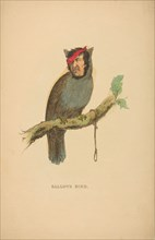 Gallows Bird, from The Comic Natural History of the Human Race, 1851.