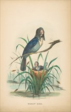 Widow Bird, from The Comic Natural History of the Human Race, 1851.