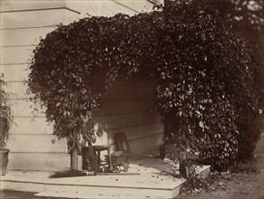 American Creeper, Blake House, 1860.