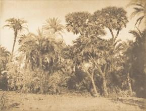 Bois de Dattiers et de Doums, à Hamarneh, 1849-50.