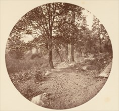 In the Yosemite Valley, ca. 1878.