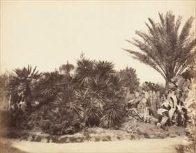 Pincian Garden, Rome, 1853-56.
