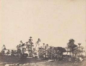 Etude de Palmiers, Bords du Nil, Kalabschi, 1853-54.