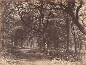 Wood-scene, Norton, Cheshire, 1856.