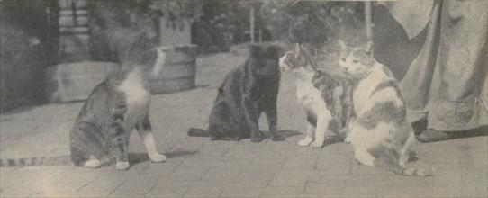 Four Cats, ca. 1895.