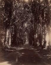 Buitenzorg Allie, Java, 1860s-70s.