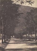 Allée of Trees, Pau, 1854.