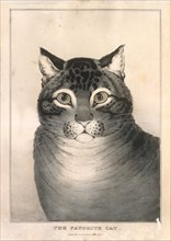 The Favorite Cat, 1838-46., 1838-46. Creator: Nathaniel Currier.