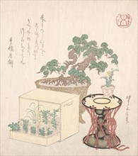 Potted Pine Tree, Drum and Seven Herbs Planted in a Box, 18th-19th century., 18th-19th century. Creator: Sunayama Gosei.