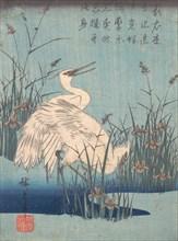 Egret in Iris and Grasses, ca. 1837., ca. 1837. Creator: Ando Hiroshige.