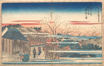 Morning Cherries at Yoshiwara. Creator: Ando Hiroshige.