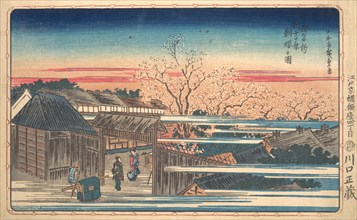 Morning Cherry Blossoms at Shin-Yoshiwara. Creator: Ando Hiroshige.
