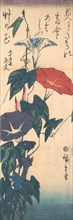 Morning Glories, ca. 1843., ca. 1843. Creator: Ando Hiroshige.