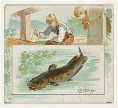 Catfish, from Fish from American Waters series (N39) for Allen & Ginter Cigarettes, 1889.