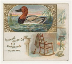 Canvas-Back Duck, from the Game Birds series (N40) for Allen & Ginter Cigarettes, 1888-90.
