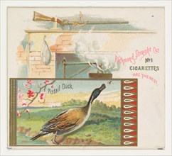 Pintail Duck, from the Game Birds series (N40) for Allen & Ginter Cigarettes, 1888-90.