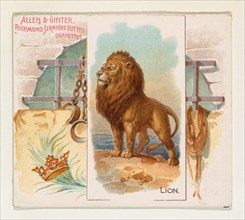 Lion, from Quadrupeds series (N41) for Allen & Ginter Cigarettes, 1890.
