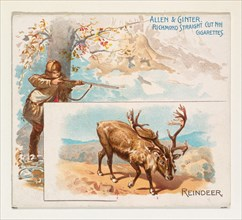 Reindeer, from Quadrupeds series (N41) for Allen & Ginter Cigarettes, 1890.