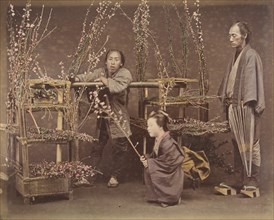 [Two Japanese Men and One Japanese Woman Posing with Flowering Branches], 1870s.