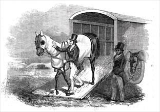 Race-horse van