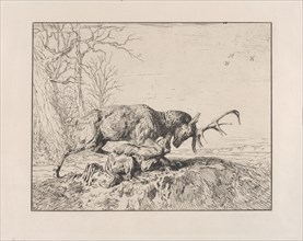 Stag Fighting a Wolf