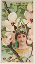 Magnolia: Magnificence, from the series Floral Beauties and Language of Flowers (N75) for Duke brand cigarettes, 1892.