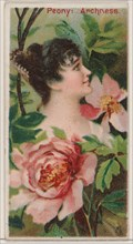 Peony: Archness, from the series Floral Beauties and Language of Flowers (N75) for Duke brand cigarettes, 1892.