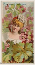 Primrose: Flirtation, from the series Floral Beauties and Language of Flowers (N75) for Duke brand cigarettes, 1892.